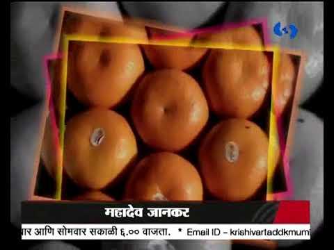 Krishivarta Bajarbhav - 09 July 2018 - कृषीवार्ता बाजारभाव