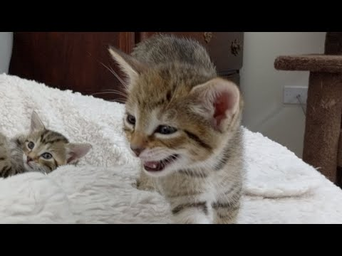 Kitten Close Up 2017-08-07