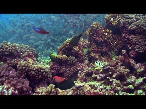 UN DESA Chief: The Ocean Conference Will Be A