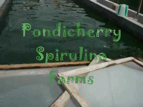 spirulina - Pondicherry Spirulina Farms - (Puducherry - India) Intro-1