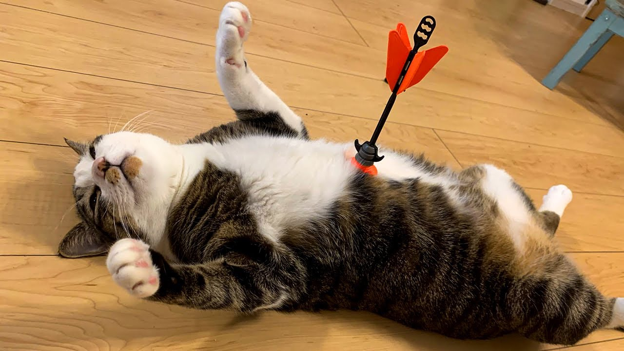Overdramatic Pets That Will Make You Smile