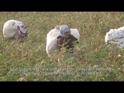 Cotton Crimes: Uzbek people speak about forced labour in cotton industry