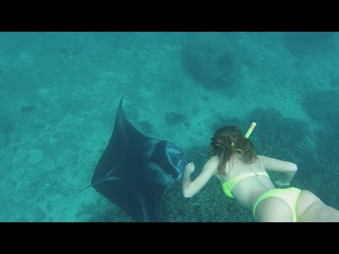 SWIMMING WITH SHARKS AND MANTA RAYS IN FIJI (Watch in HD)