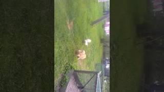 Оказывается собаки боятся питухов!!!☺