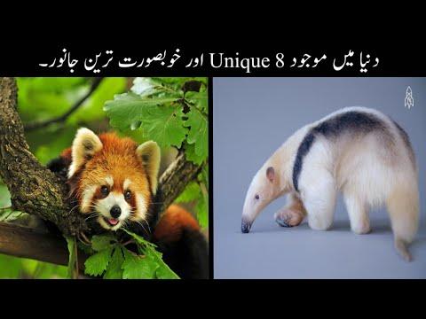 8 Most Beautiful And Rare Animals Urdu  دنیا میں موجود خوبصورت ترین جانور    Haider Tv