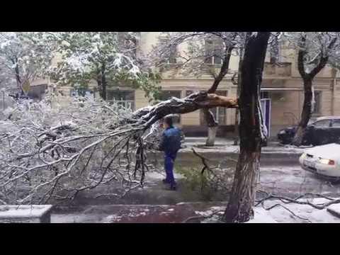Chișinău. Ninsori și copaci distruși pe străzile din oraș. (20.04.2017)