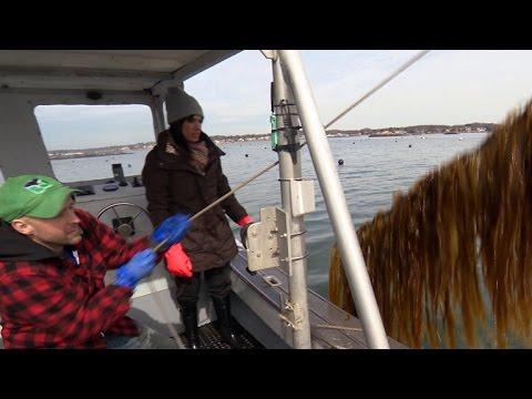 Fisherman-turned-seaweed farmer sees future in kelp