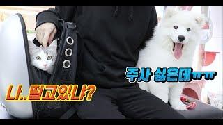 강아지와 고양이 함께 동물병원가다 🏥 과연 누가 더 겁쟁이일까요?