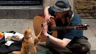 Der Mann ist völlig fertig, doch was die Katze macht, verändert sein Leben völlig.