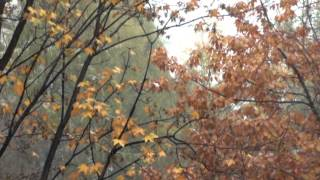 "Timelapse October 2012 Dębica ""Golden autumn"""