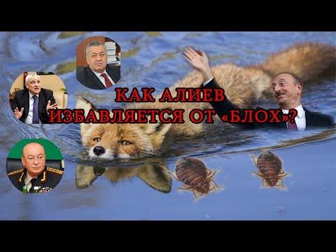 КАК АЛИЕВ  ИЗБАВЛЯЕТСЯ ОТ «БЛОХ»?: Talyshistan Tv 14.06.2017 News in azerbaijani
