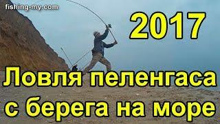Ловля пеленгаса c берега рыбалка на море 2017