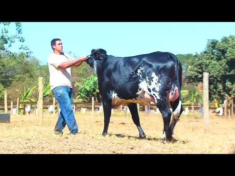 LOTE 17 2518