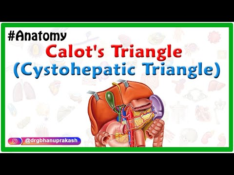 Calot's triangle (cystohepatic triangle) - Boundaries , contents , Clinical anatomy