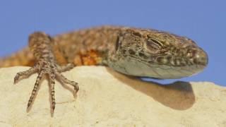 Krka, Wild Nature : Reptiles & Amphibians