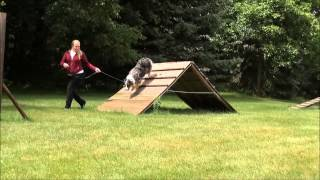 Stella (australian Shepherd) Trained Dog Video Minneapolis