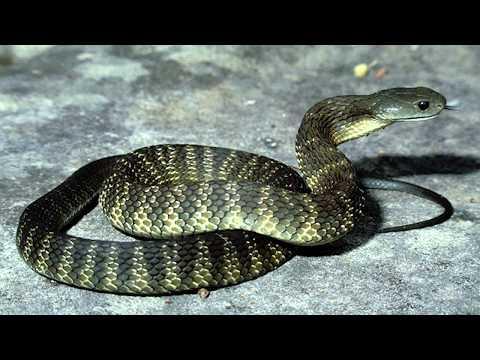 Какая змея самая ядовитая? Топ 5 опасных змей