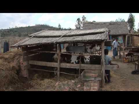 Smallholder farmer's responses to climate change
