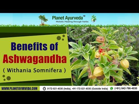 Ashwagandha Extract Uses
