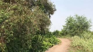 Xem trực tiếp khu rừng, ruộng rộng mênh mông hung thủ b.ắ.n người ở Củ Chi có thể đang ẩn nấp