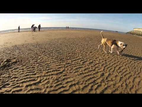 Dog Chases Drone on Blackpool Beach