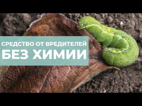 Как избавиться от гусениц