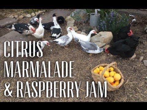 Picking Citrus, Making Jam & Marmalade Inspiration