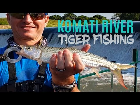 Tiger Fishing In The Komati River, South Africa (Apr 2019)