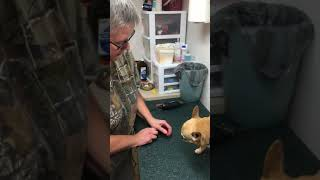 HOW TO USE A DREMEL ON A SMALL DOG'S NAILS