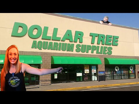 Top Ten Dollar Store Aquarium Supplies