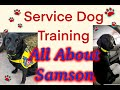 Vlogmas Day 9: Service Dog Training and Life: All About Samson: Owner Trained Service Dog