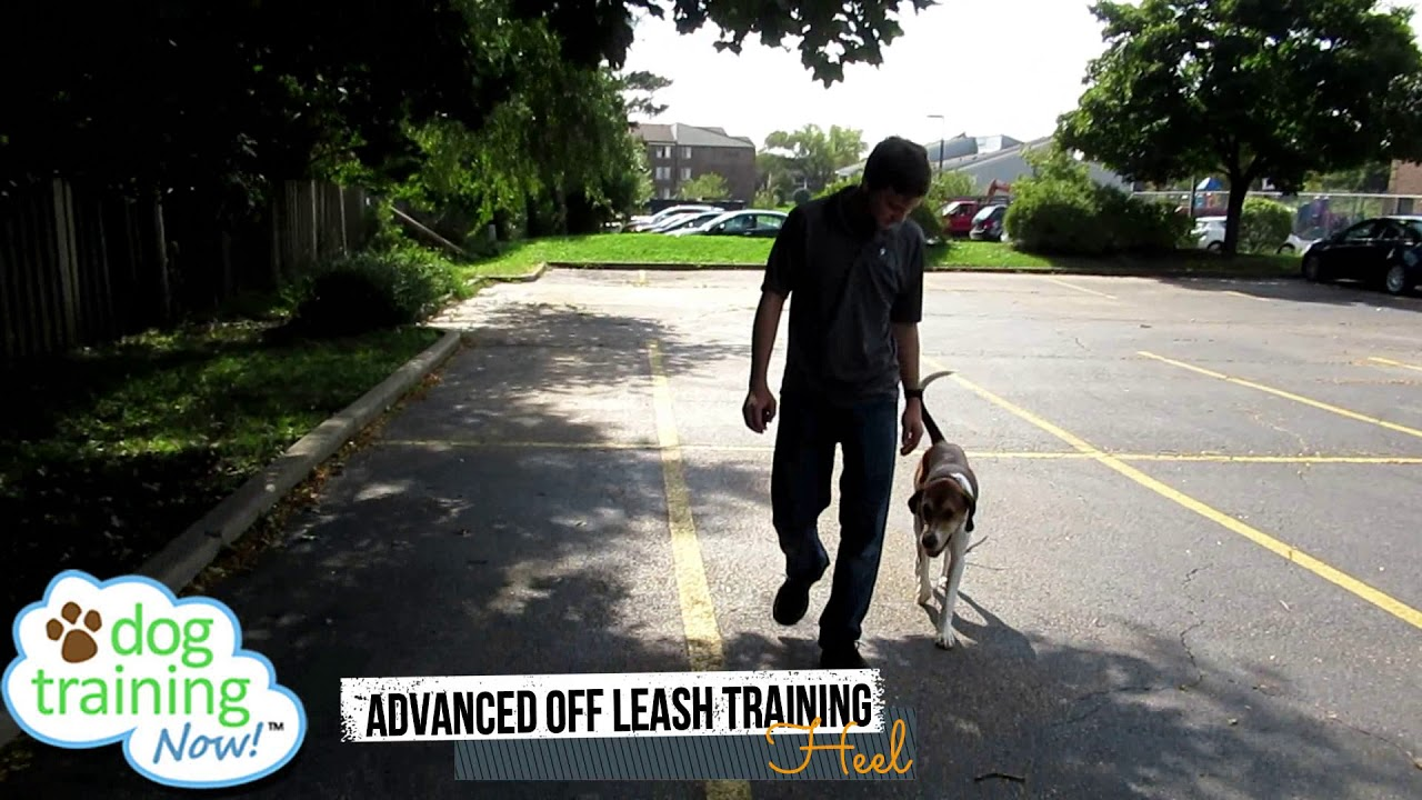 Dog Training Now | Professional Dog Trainers in Schaumburg