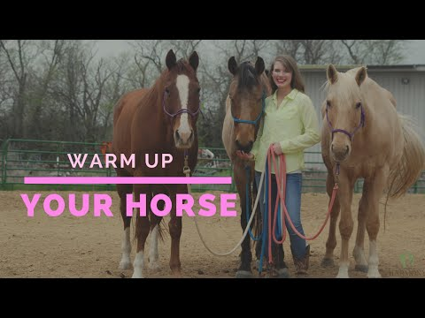 How to Warm Your Horse Up Before You Ride