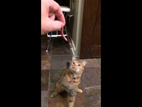 Special Cat Fail  (extra special)
