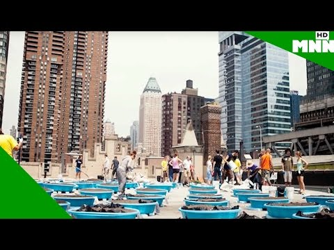 Waste Not: Sustainable Living in NYC