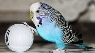 BIRDS LOOSE MOTION AND THIER TREATMENT IN URDU