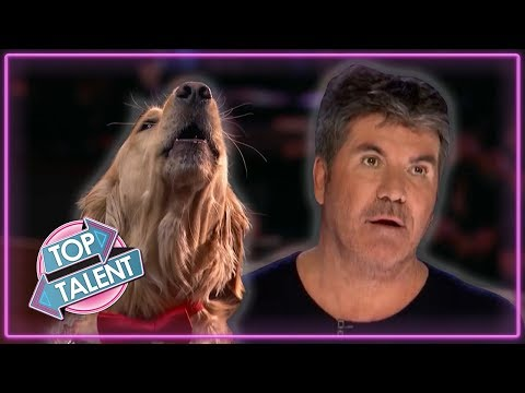 SUPERB Singing DOG Auditions Around The World! | Top Talent