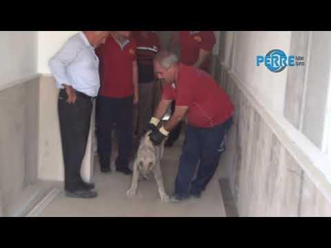 Asansör Boşluğunda Mahsur Kalan Köpek İtfaiye Kurtardı