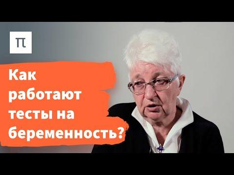 Гормоны и беременность – Ольга Смирнова / ПостНаука