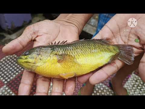 Fish Quality  Semibiofloc Pond