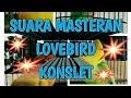 Suara Masteran Kompilasi Dari Beberapa Lovebird Konslet Nasional  Mp3 - Mp4 Download
