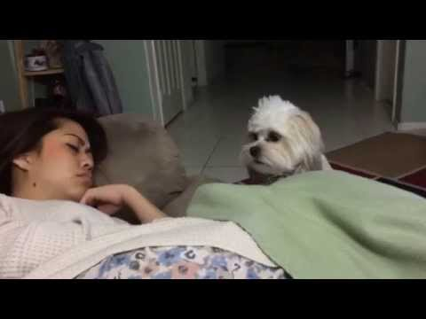 My Sleeping Sister And Her Dog