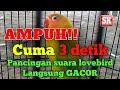 Ampuh Pancingan Suara Lovebird Ngetik Ngekek Langsung Gacor  Mp3 - Mp4 Download