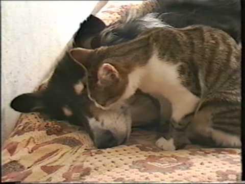 Котёнок и собака (Маня и Нюша)