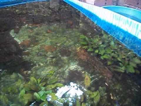 Criar guppys doovi for Cria de peces ornamentales