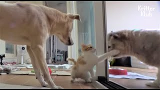 Cat Protects Her Shy, Newly Adopted Dog Brother From Being Bullied (Part 1) | Kritter Klub
