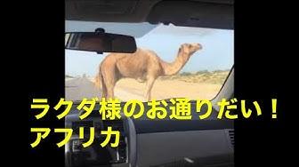 答え ラクダ を 探せ