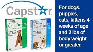 Capstar Flea Treatment for Dogs and Cats 2 lbs and Up