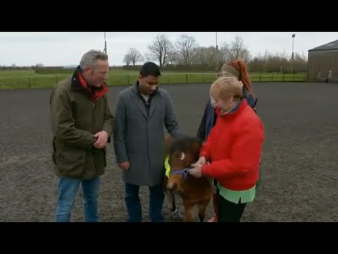 Meeting Digby For The First Time- BBC Countryfile- #UKsFirstGuideHorse