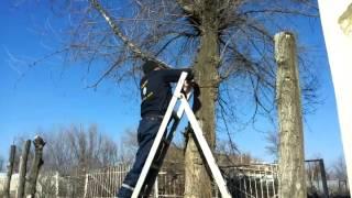 Пилим деревья зимой. 05.02.15.(, 2015-03-22T04:33:35.000Z)